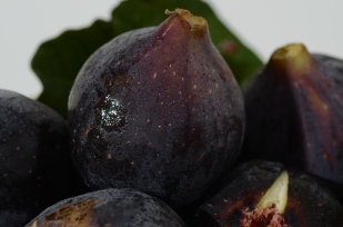 black.figs002