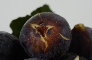 black.figs003