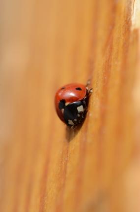 lady.bug002