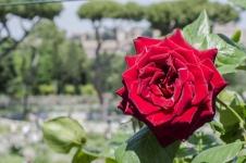 rose.garden012