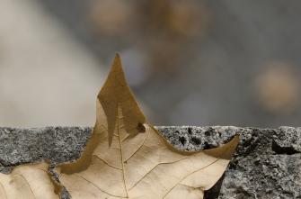 autumn.walk.rome008
