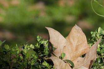 autumn.walk.rome009
