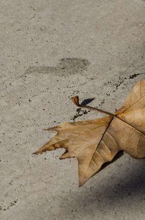autumn.walk.rome010