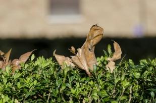 autumn.walk.rome011