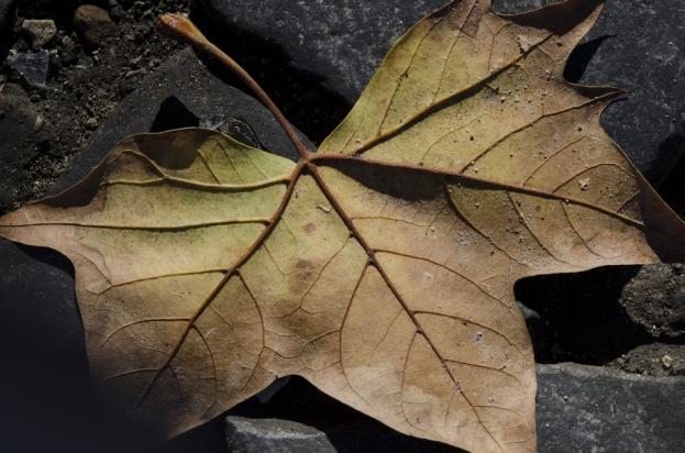 autumn.walk.rome012