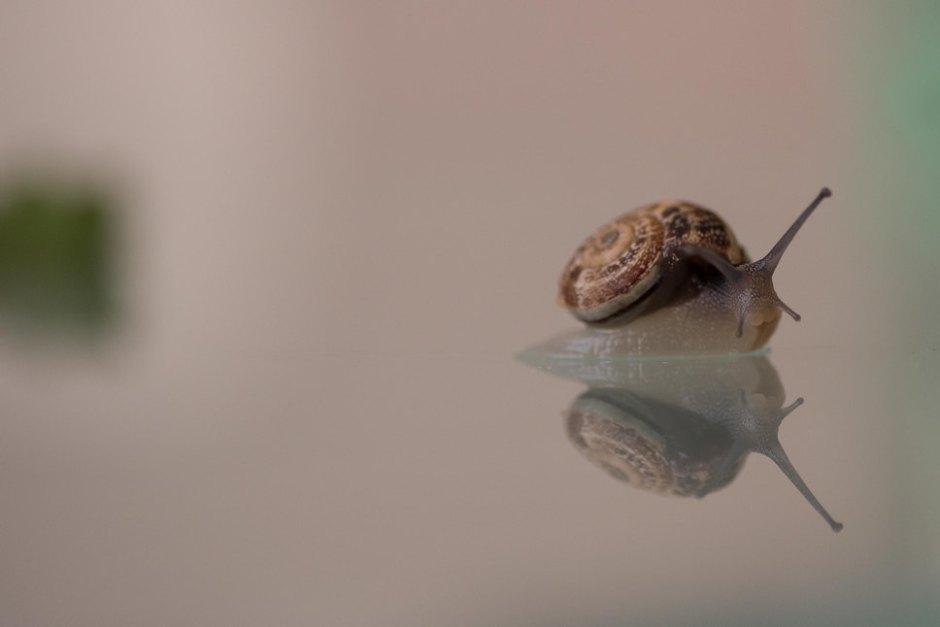 snail.surfs.onthe.glass001