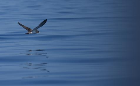 maddalena-s-birds001