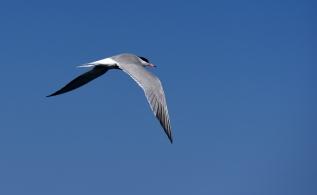 maddalena-s-birds003