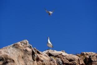 maddalena-s-birds004