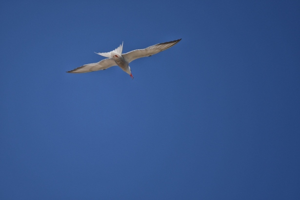 maddalena-s-birds005