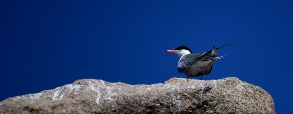 maddalena-s-birds006