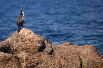 maddalena-s-birds007